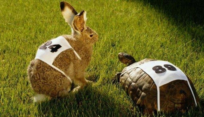 tartaruga e coniglio